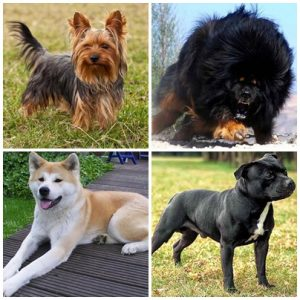 10 Most Expensive Dog Breeds In Pakistan