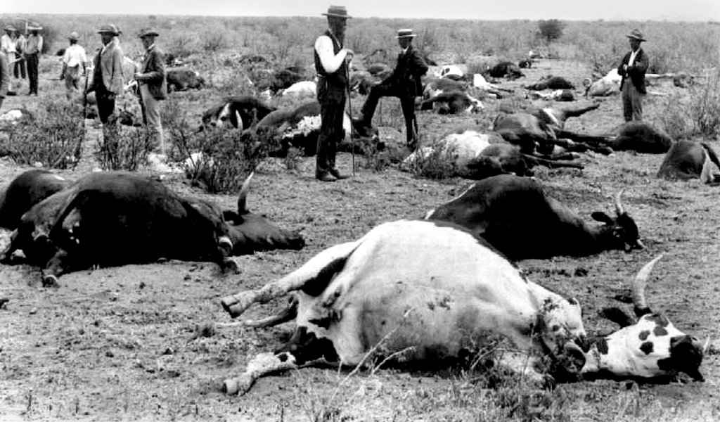 Rinderpest: A disease of cattle & buffalo Epidemiology, Pathogenesis, Diagnosis and treatment