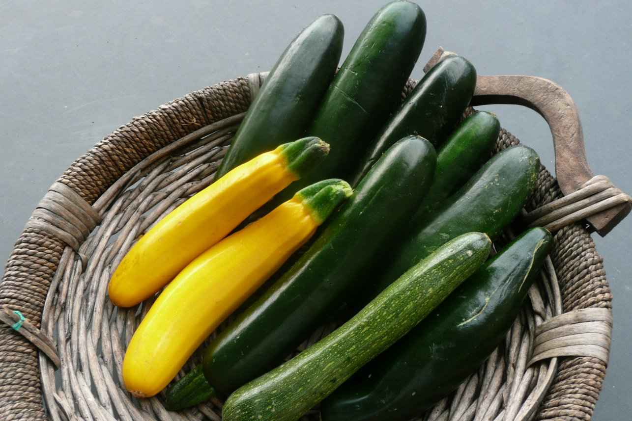 Zucchini Perfect Fruits And Vegetables For Dogs