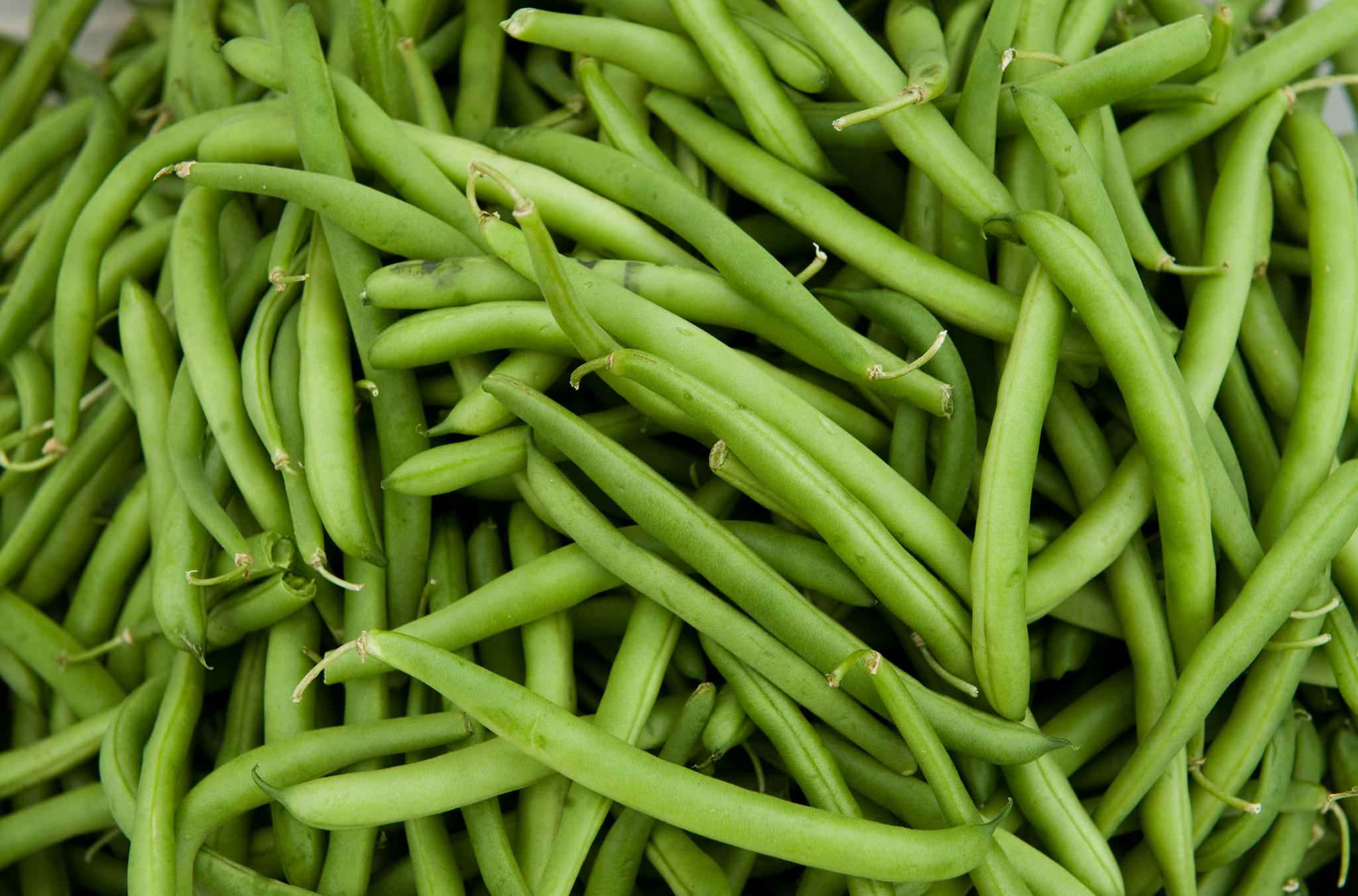 green beans perfect fruits and vegetables for dogs