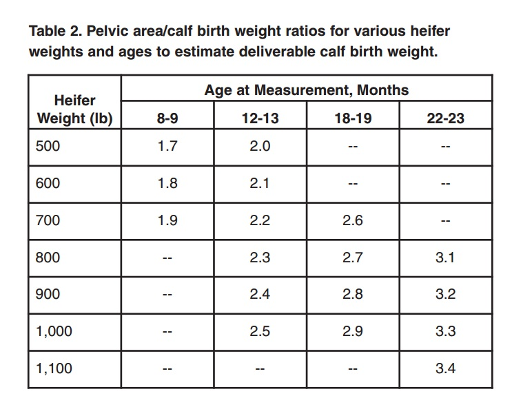 Pelvic Area Measurements in Replacement Heifers