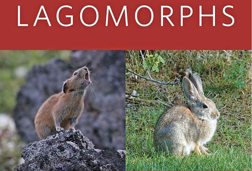 Lagomorphs Pikas, Rabbits, And Hares Of The World PDF