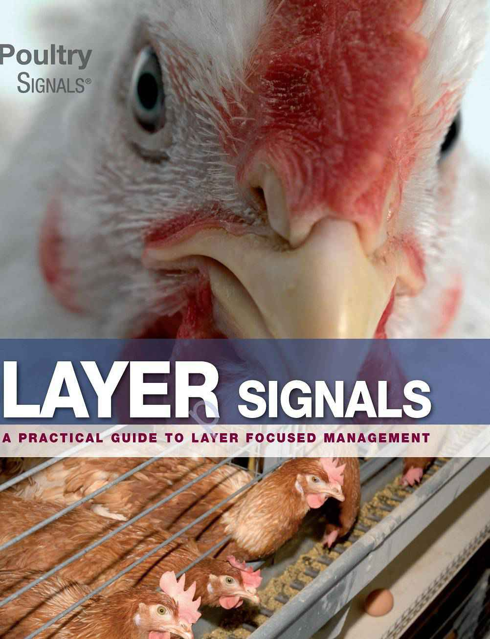 Layer Signals PDF