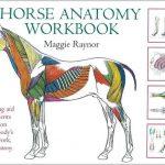 The Horse Anatomy Workbook PDF