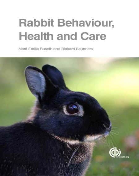 Rabbit Behaviour Health And Care