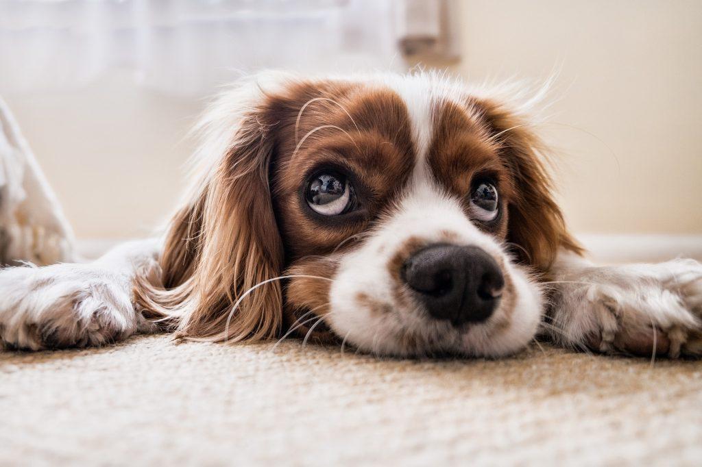 7 Sky Scrapper Technique to Help Your Dog Live Longer