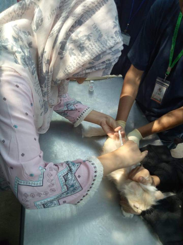 Importance of World Rabies Day 3