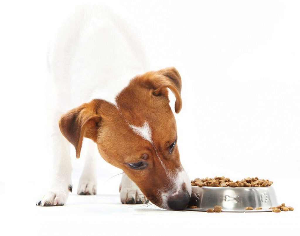 Modern Pets Food Complete Overview