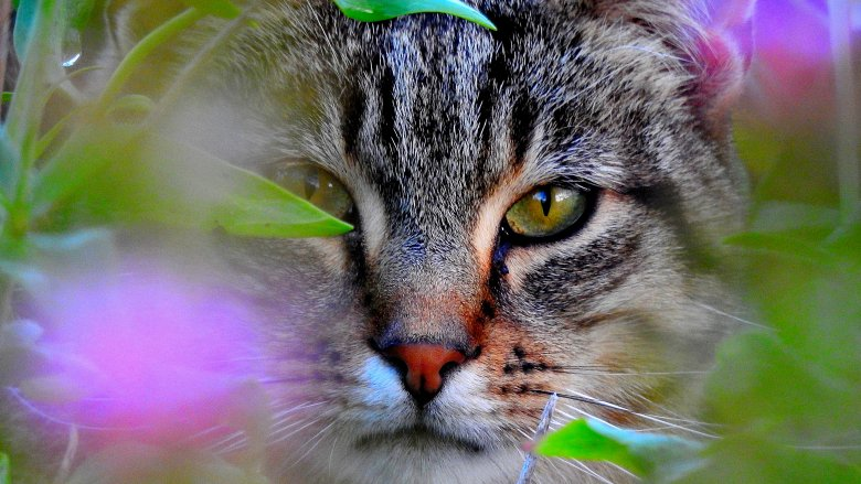 CAN A CAT PARASITE CONTROL HUMAN THINKING