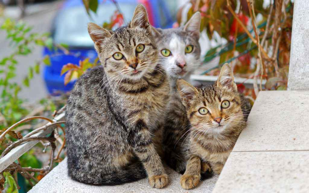 SAVANNAHS ARE THE SUPREME EXPENSIVE CAT