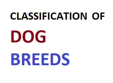 CLASSIFICATION OF DOG BREEDS