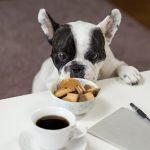 COLD PRESSED DOG FOOD