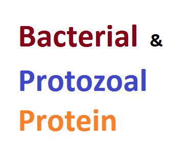 Difference Between Bacterial and Protozoal Protein