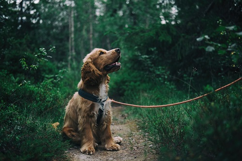 THE ADVANTAGES OF FISH AS FOOD FOR DOGS