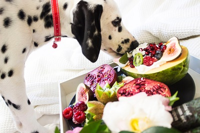 What Food is Right For Your Dog