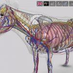 3D Bovine Anatomy Android App 02