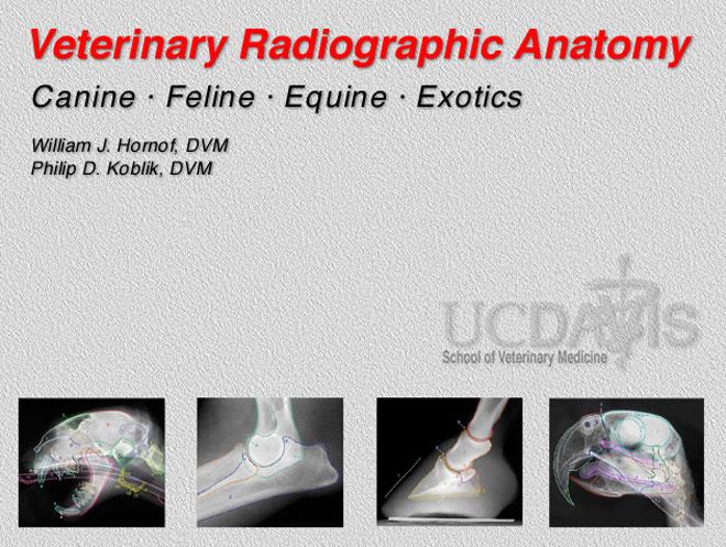 Veterinary Radiographic Anatomy Windows Application