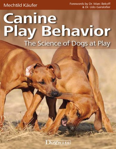 Canine Play Behavior The Science Of Dogs At Play